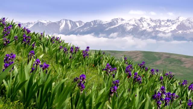 Beautiful Alps video