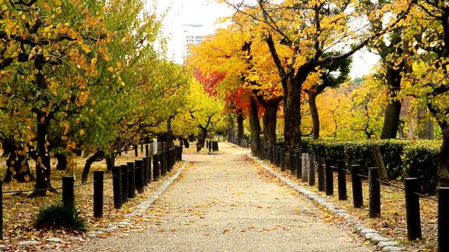 Beautiful Autumn Park video
