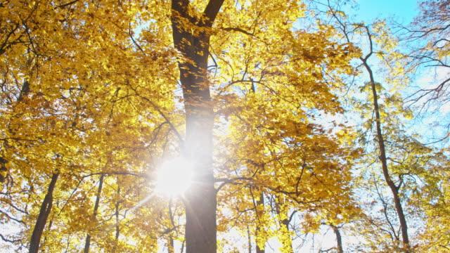SLO MO Beautiful autumn trees video