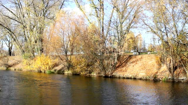 Beautiful  autumnal park and river video