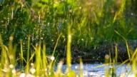 Beautiful background: water Drops falling on fresh green grass video