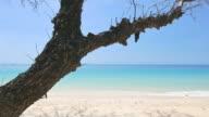 HD Beautiful beach video