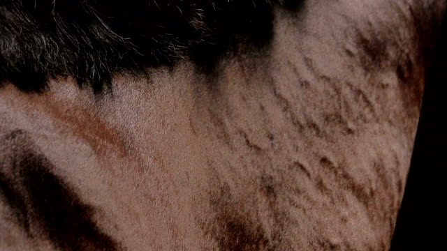 beautiful brown horse skin while moving with light reflections video
