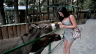 Beautiful Brunette Girl Feeding Donkey At Zoo. She Laughs And Wonders video