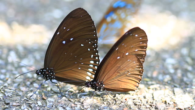 Beautiful Butterfly on ground video