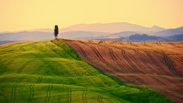 Beautiful candid wheat fields In Tuscany video