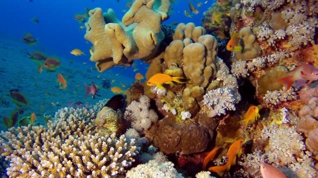 Beautiful Coral Garden video