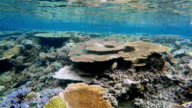 Beautiful coral reef on Maldives - South Ari Atoll video