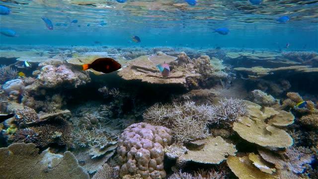 Beautiful coral reef on Maldives - South Ari Atoll video