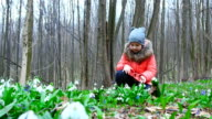 A beautiful , cute little girl enjoys blossoming snowdrops in a spring forest video