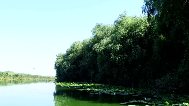 Beautiful Day In Danube Delta Romania video