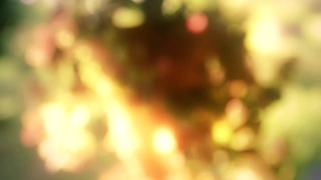 Beautiful defocused flowers video