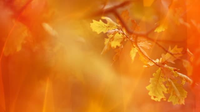 Beautiful Fall video