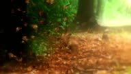 Beautiful falling leaves in autumn loop video