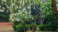 Beautiful falling shot of Indian oak flower video