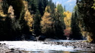 Beautiful Fast Moving Mountain River video