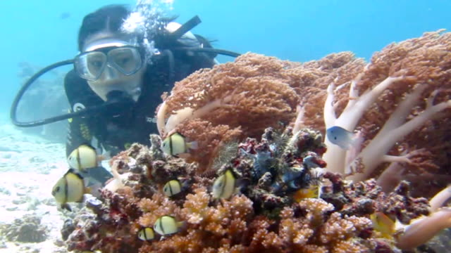 Beautiful Female Scuba Diver Watches Tropical Fish video