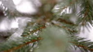 Beautiful fir-tree in snow in winter and falling snow video
