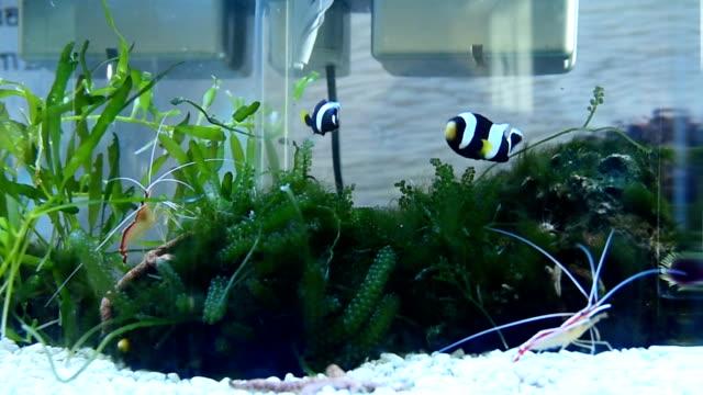 Beautiful Fish and shrimp video