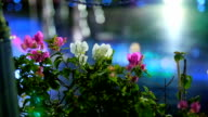beautiful flowers in the rays of light at night video