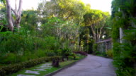 Beautiful foliage on a tropical island. many different flowers and trees. Tropical fairy tale. video