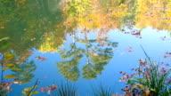 beautiful forest lake video