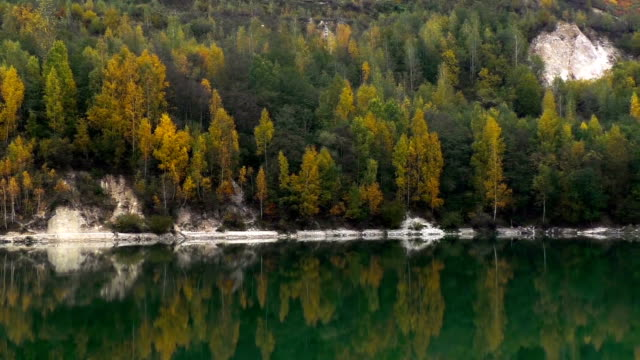 Beautiful forest reflecting on calm lake shore video