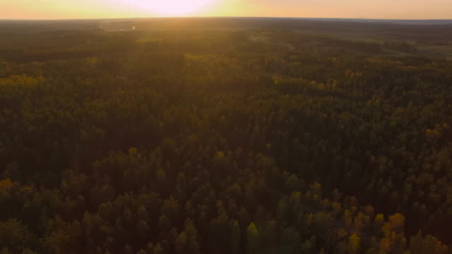 Beautiful forest trees in late sunset video