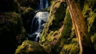 Beautiful Forest Waterfall In The Evening video