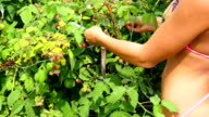 beautiful girl in swimsuit gathers ripe berries video