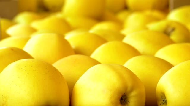 beautiful golden apples video