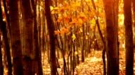 Beautiful, golden autumn. Trees on the wind. video