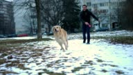 Beautiful golden retriever dog playing with a boy outdoors video
