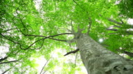 Beautiful green forest in early summer. video