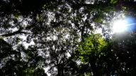 beautiful green forest video