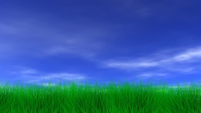 Beautiful Green Grass & Blue Sky video