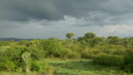 AERIAL: Beautiful green landscape and cactus trees in Africa video
