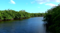 Beautiful green nature and landscapes in South Florida video