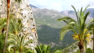 Beautiful green oasis with palm trees in rocky canyon video