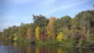 Beautiful greenwood nature in autumn season video