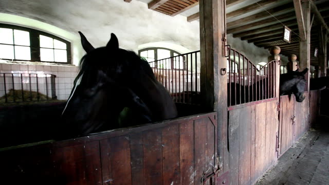 Beautiful horse in a stable video