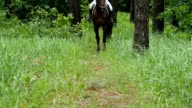 Beautiful horse staying on grass in forest and wagging its tail in slow motion video