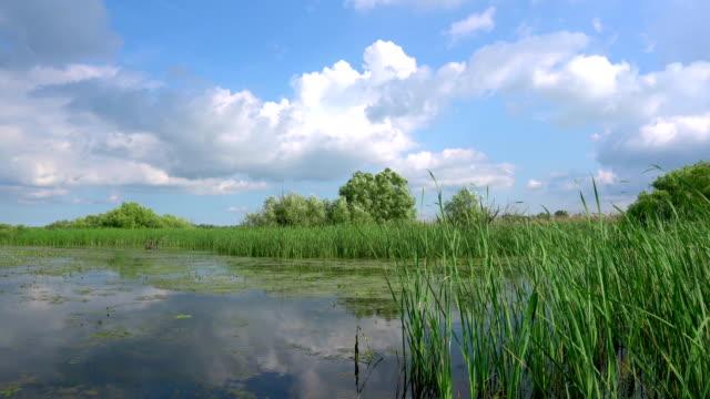 Beautiful lake in Danube Delta video