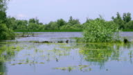 Beautiful lake in Danube Delta video