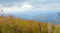 Beautiful landscape, flower meadow, conifers video