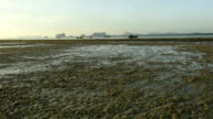 Beautiful landscape of the ocean and beach with crabs while low tide video