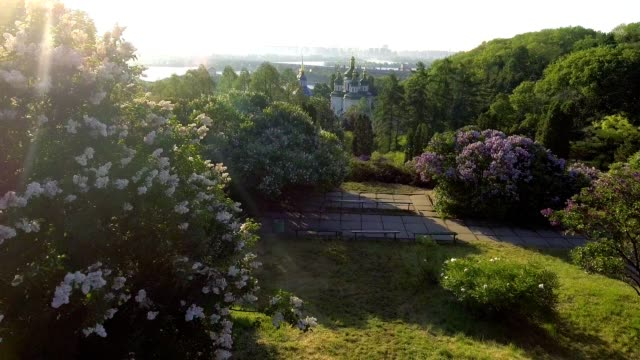 beautiful lilac branches swaying in the wind. Aerial view. Kiev, Ukraine. video