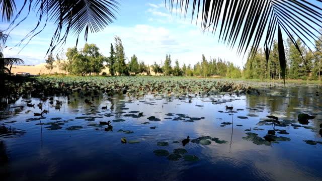 Beautiful Lotus lake video