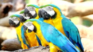 Beautiful Macaw video