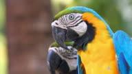 Beautiful Macaw video